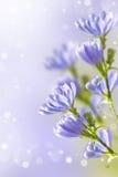 Knapweed Wildflowers Стоковая Фотография RF