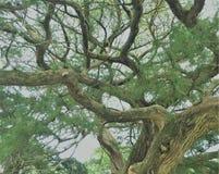 Knarled cyprysowy drzewo pobliski Psi Rzeczny Alabama zdjęcia royalty free