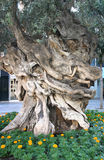 Knarled tree Stock Photo