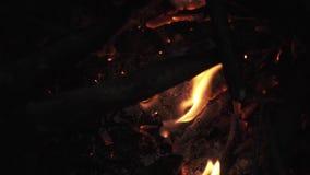 Knastra flammande flamma för vedträ i hög av lägereld arkivfilmer