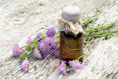 Knautia arvensis and pharmaceutical bottle. Medicinal plant Knautia arvensis, commonly known as field scabious and brown pharmaceutical bottle on old wooden Royalty Free Stock Photos