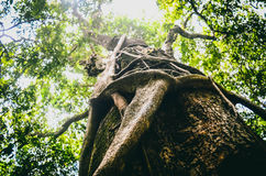 Knckles Mountain Range. Sri Lanka. Meemure Hunnasgiriya Travel Adventure to Dewala Kadulla Royalty Free Stock Photo