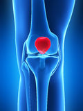 Knee anatomy Royalty Free Stock Image