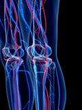 The knee Royalty Free Stock Photo
