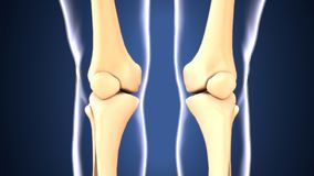 3d illustration of skeleton knee bone anatomy. The knee joins the thigh with the leg and consists of two joints: one between the femur and tibia tibiofemoral stock illustration