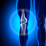 Knee Joint - Anatomy Bones. Medical imaging Royalty Free Stock Photos