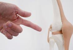 Knee joint doctor Lizenzfreie Stockbilder