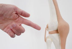 Knee joint doctor Royalty Free Stock Photos