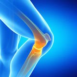 The knee joint. Medical illustration of the knee joint Royalty Free Stock Images