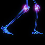 Knee joints Royalty Free Stock Image