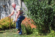 Knee pain or damage. Arthritis. A senior gardener holding his knee because of pain, arthritis or injury stock photo