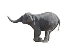 Kneeled elephant Royalty Free Stock Photos