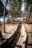 Kneipp足迹在森林 与雪的冬天季节 库存照片