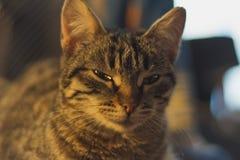 knepig katt Arkivfoto