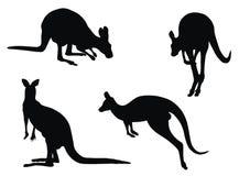 Känguru Stockfoto