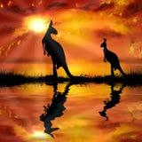 Känguru på en härlig solnedgångbakgrund Arkivfoto