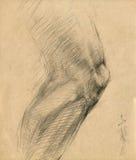 Knie - Zeichnung vektor abbildung