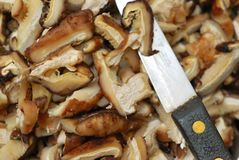 Knife cutting mushrooms Stock Images