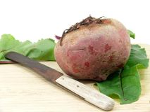 Fresh cutting Chioggia beets. Knife and fresh Chioggia beets Royalty Free Stock Photos