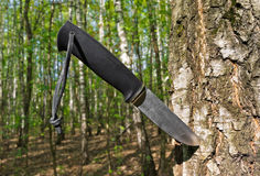 Knife stuck into a tree Stock Images