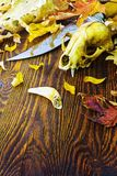 Knife surrounded by animal bones in the fall foliage Stock Photos