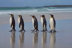 König Penguins - Falklandinseln Lizenzfreie Stockfotos