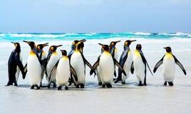 Könige des Strandes Stockfoto
