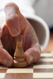 Knight chess Stock Images