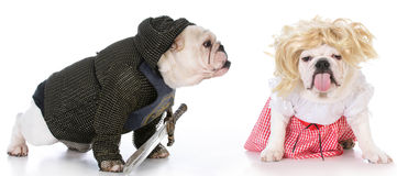 Knight and damsel. Bulldogs dressed up like a knight and a damsel in distress on white background Royalty Free Stock Photo