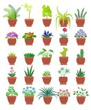 Knights-star Orchid Collection Vector Illustration. Knights-star and orchid collection of room plants in pots, room plants set with blossom and leaves, vector Stock Images