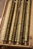 Königinbienen-Zellenhaus mit königlichem Gelee Lizenzfreies Stockbild