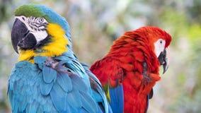 Knip van papegaaien Stock Afbeelding