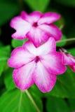 Knip van uiterst kleine bloemen royalty-vrije stock afbeeldingen