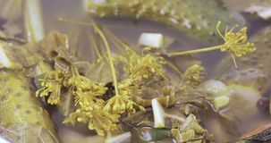 Knipagurkor med dill stock video