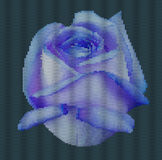 Knitted background - flower rose.  Blue rose on a dark cyan background.  Vector illustration Stock Photo