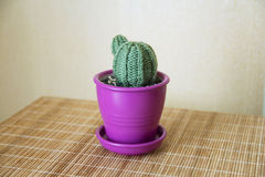 Knitted cactus handmade Royalty Free Stock Photos