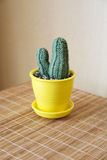 Knitted cactus handmade Stock Photo