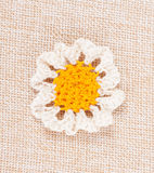 Knitted daisy flower Stock Image