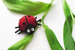 Knitted ladybug on green leaves. royalty free stock photos