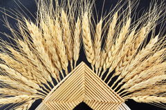 Knitted patterns of ears of oats barley rye or wheat Stock Photography
