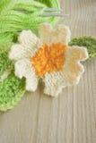 Knitted primrose spring woollen flower Royalty Free Stock Images