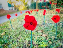 Knitted red remembrance day poppies planted in a field. Knitted red remembrance day poppies planted as if in a field on a village green in Kent stock photos