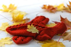 Knitted wool socks in red on a light wooden background. Stock Photography