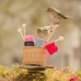Knitting birds Royalty Free Stock Photo