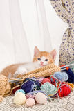 Knitting kitten. Six weeks old kitten being naughty with knitting wool Stock Images
