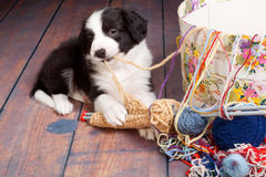 Knitting puppy stock photography