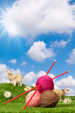 Knitting Yarn With Sheep Royalty Free Stock Images