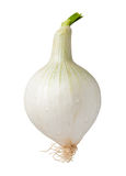 Knob Onion Isolated with clipping path Royalty Free Stock Photography