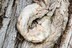 Knobby bark of an old tree Royalty Free Stock Photography