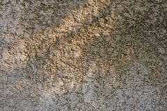 Knobby cement wall in tree shade Royalty Free Stock Image